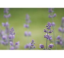 Jardin d'été Photographic Print
