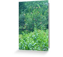 Explosion of tiny red tree blossoms Greeting Card