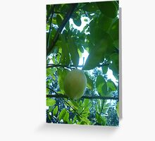 Sunlight bouncing of lemon in a tree Greeting Card