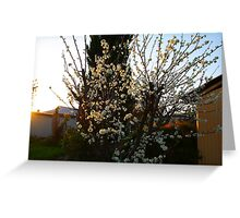 Backyard Blossom Greeting Card