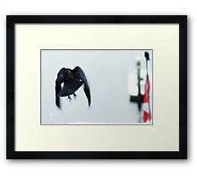 bird taking off in the snow vancouver 2011 Framed Print