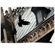 crow flies at notre dame  Poster