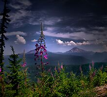 A Touch Of Love by Charles & Patricia   Harkins ~ Picture Oregon