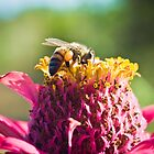 Bee on Flower by Tim Cowley