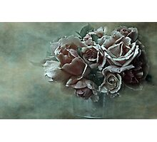 """""""Dreamily Roses ..."""" Photographic Print"""