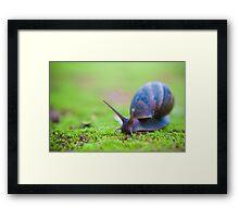 Snail on Moss Framed Print