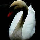 Among My Swan by outsider