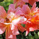 Dancing petals by Susan Moss