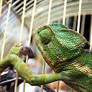Chameleon by Victoria Kidgell