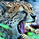 Cheetah Yawn by SuddenJim