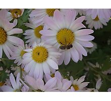 Fall flowers and a bee Photographic Print