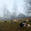 Sheep at Hometown by Daidalos