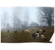 Sheep at Hometown Poster