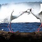 A fight over a nesting site by TheBrit