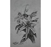 Lilies Sketch Photographic Print