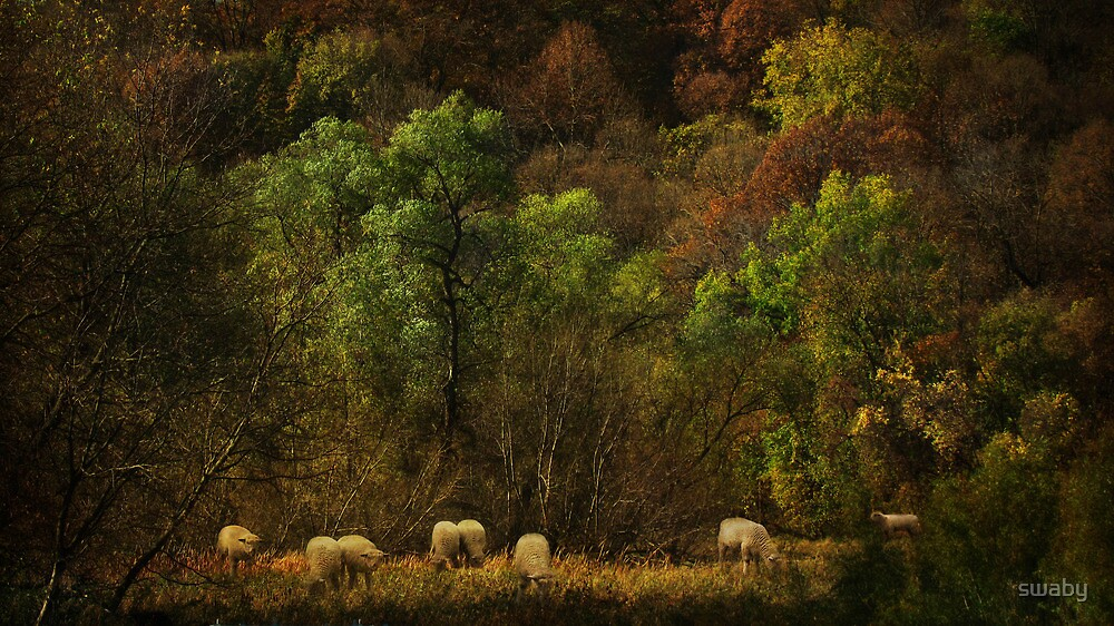 Grazing by swaby