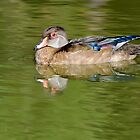 Female Wood Duck by Gerda Grice