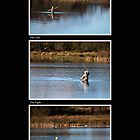 Fly Fishing Triptych with Black Background by Steve Purnell