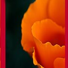 California Poppy Flower - iPhone Case by Yves Rubin