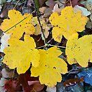 Yellow tree leaves by Vasil Popov
