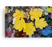 Yellow tree leaves Canvas Print
