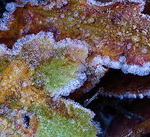 Morning frost by Vasil Popov
