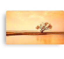My Tree - Victoria Point Qld Australia Canvas Print