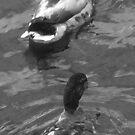 As Partners We Shall Swim by joerelic37