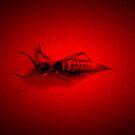 Red Light Locust by joerelic37