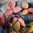Autumn leaves by Vasil Popov