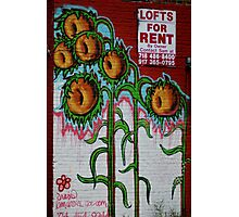LOFTS FOR RENT Photographic Print