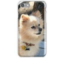 Pomeranian dog iPhone Case/Skin