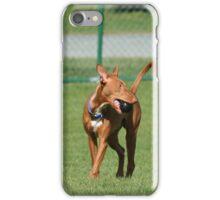 Pharaoh Hound iPhone Case/Skin