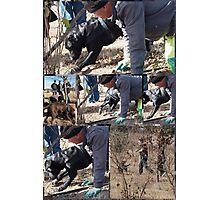 Working Dog, hunting Truffels  Photographic Print