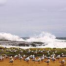 Gulls by Doug Cliff