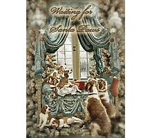 Welsh Springer Spaniels wait for Santa Paws Photographic Print