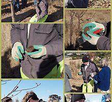 Truffel hunt Sutton NSW by Tom McDonnell