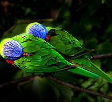 Technicolour Lorikeets by Margot Kiesskalt