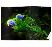 Technicolour Lorikeets Poster