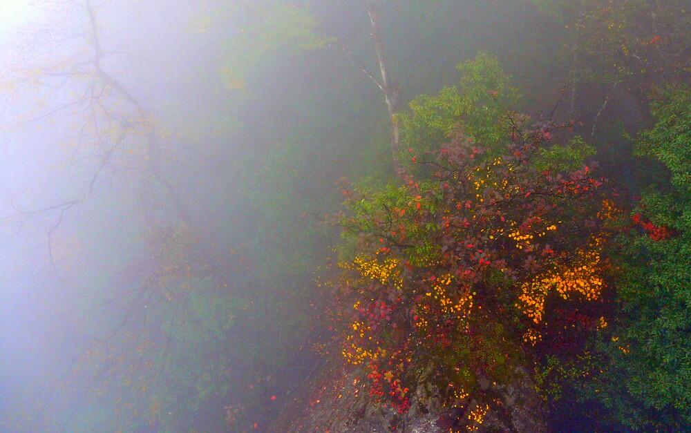 Misty Autumn by Brian Bo Mei