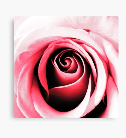 Contours of Pink Canvas Print