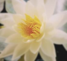 Lily flower, somewhere in Malaga, Spain by bethischeery