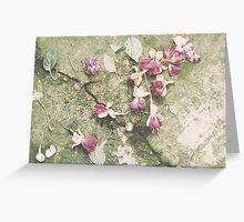 Flower heads on cracked flooring, Calgary, Alberta, Canada Greeting Card