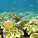 The Lizard Island Reef by Adam Gormley
