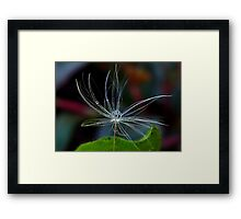 Dandelion and Raindrop Framed Print