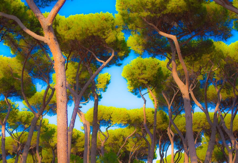 Trees, Villa Borghese, Rome by Dean Bailey