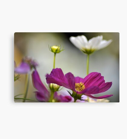 Delighting...On 2 Featured Works Canvas Print