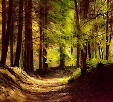 Fairy Trail by Gary Finnigan