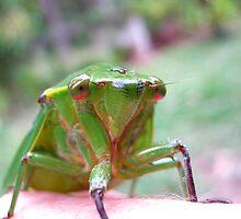 7 o'clock Cicada by Vanessa Barklay