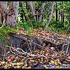 Cudgen Creek  3 by John Van-Den-Broeke